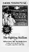 Fighting Stallion
