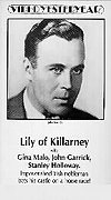 Lily of Killarney
