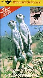 Meerkats United and the Impossible Bird