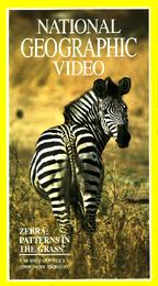 National Geographic Video - Zebra: Patterns in the Grass